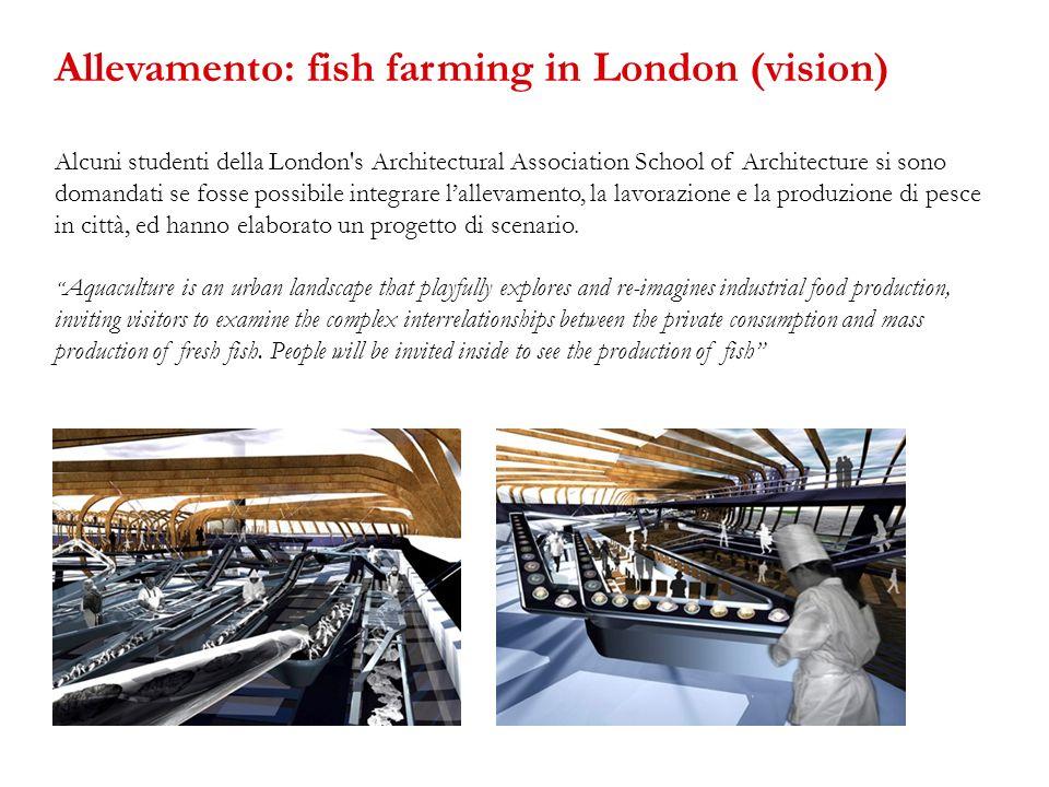 Allevamento: fish farming in London (vision)