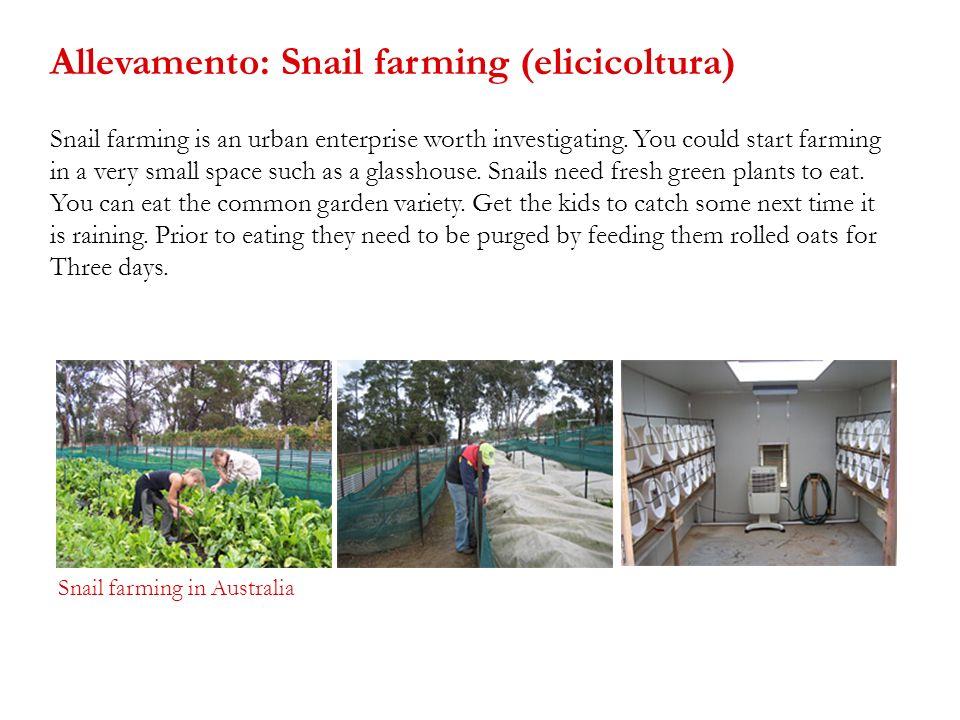 Allevamento: Snail farming (elicicoltura)