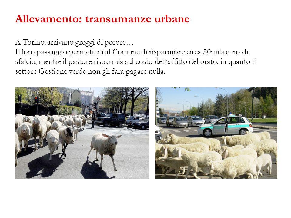 Allevamento: transumanze urbane