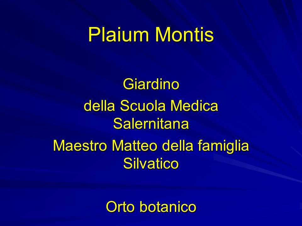 Plaium Montis Giardino della Scuola Medica Salernitana