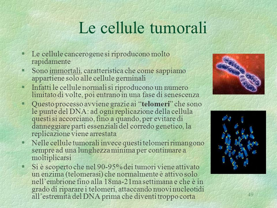 Le cellule tumorali Le cellule cancerogene si riproducono molto rapidamente.