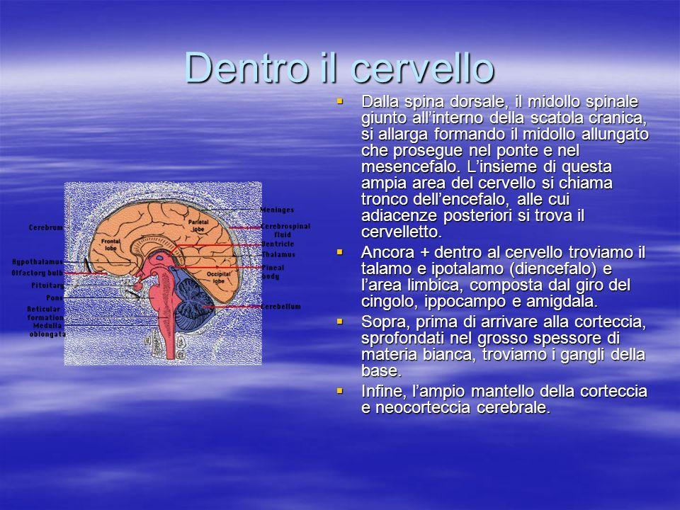 Dentro il cervello
