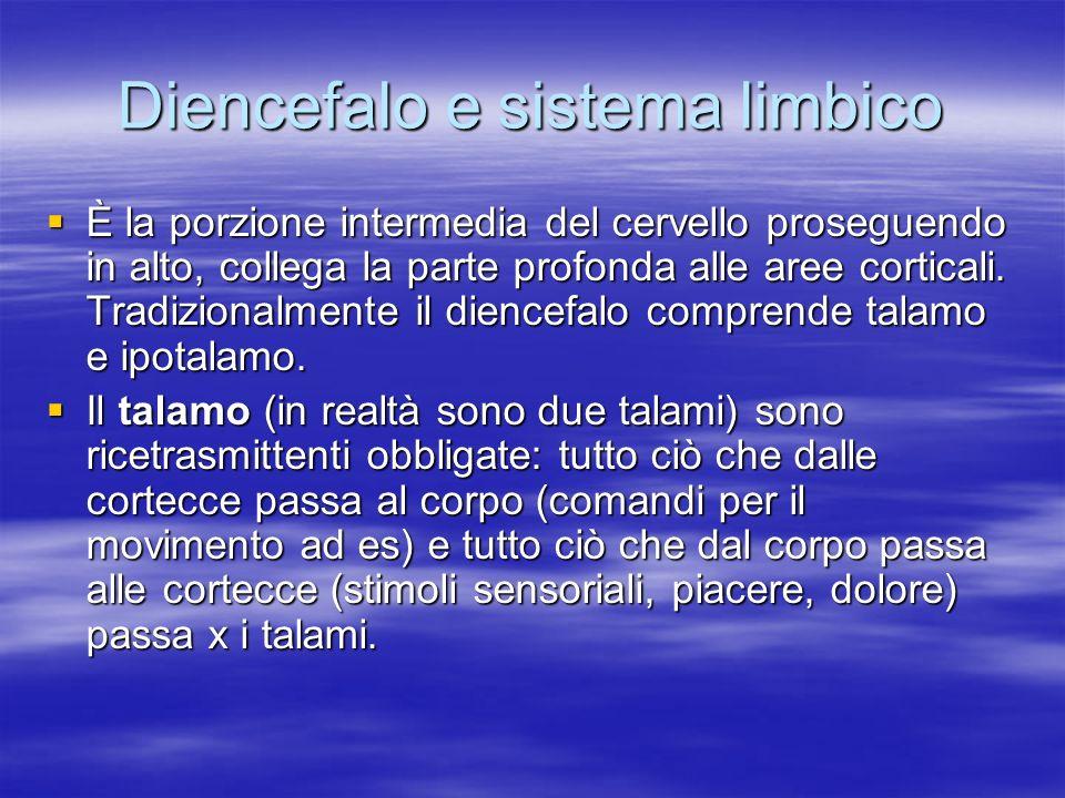 Diencefalo e sistema limbico