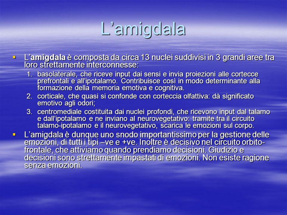 L'amigdala L'amigdala è composta da circa 13 nuclei suddivisi in 3 grandi aree tra loro strettamente interconnesse: