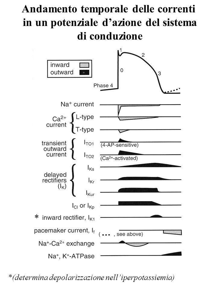 Andamento temporale delle correnti in un potenziale d'azione del sistema di conduzione
