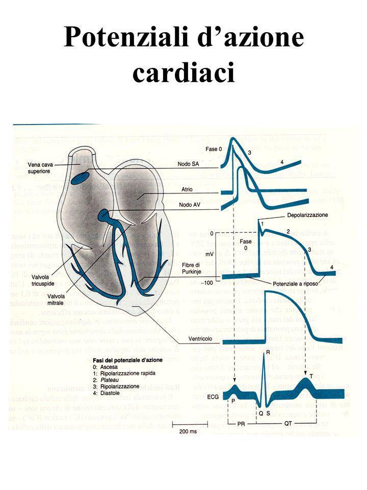 Potenziali d'azione cardiaci