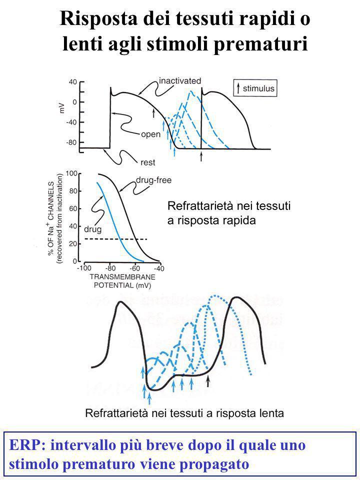 Risposta dei tessuti rapidi o lenti agli stimoli prematuri
