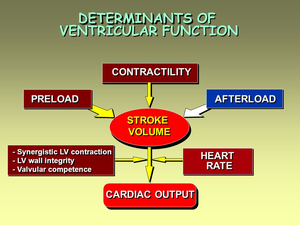 DETERMINANTS OF VENTRICULAR FUNCTION CONTRACTILITY PRELOAD AFTERLOAD