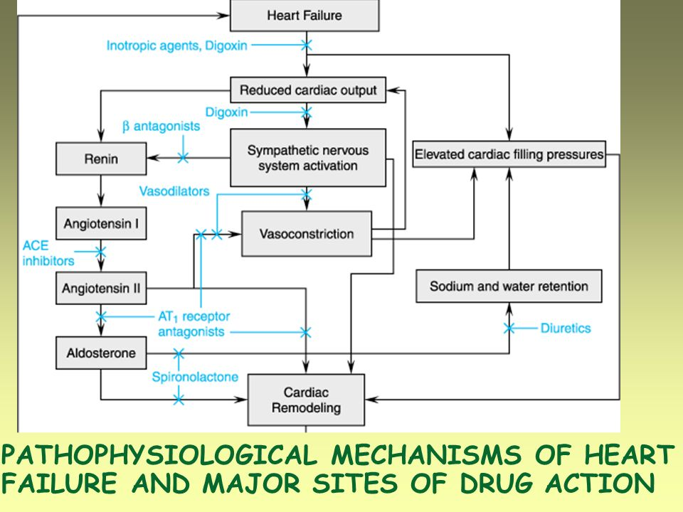 PATHOPHYSIOLOGICAL MECHANISMS OF HEART FAILURE AND MAJOR SITES OF DRUG ACTION