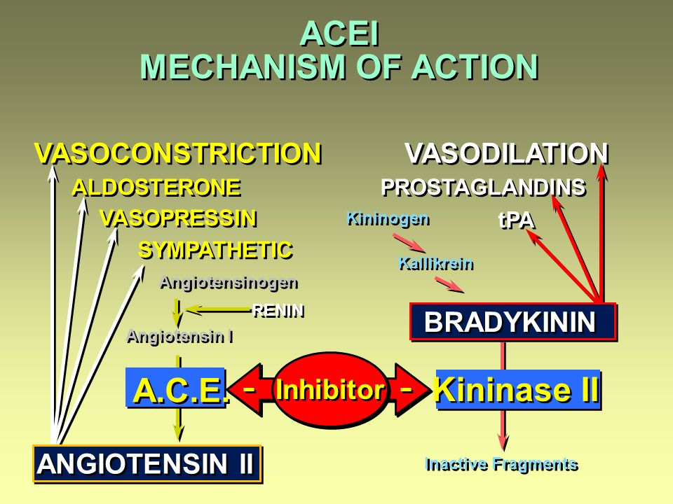 ACEI MECHANISM OF ACTION A.C.E. Kininase II