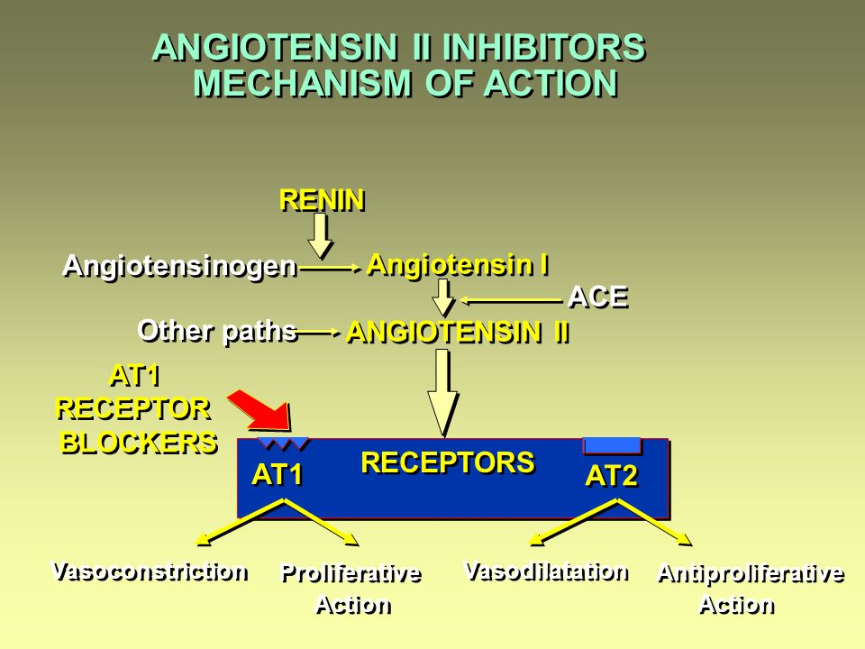 ANGIOTENSIN II INHIBITORS Angiotensin I ANGIOTENSIN II