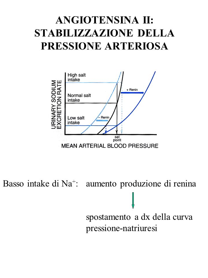 ANGIOTENSINA II: STABILIZZAZIONE DELLA PRESSIONE ARTERIOSA
