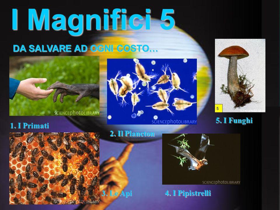 I Magnifici 5 DA SALVARE AD OGNI COSTO… 5. I Funghi 1. I Primati