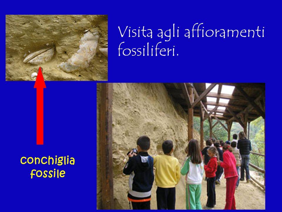 Visita agli affioramenti fossiliferi.