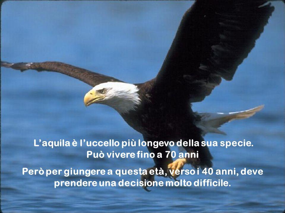 L'aquila è l'uccello più longevo della sua specie