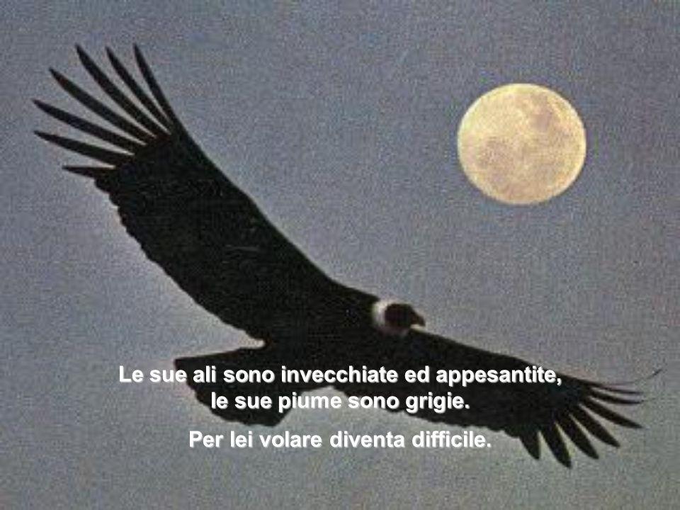 Le sue ali sono invecchiate ed appesantite, le sue piume sono grigie.
