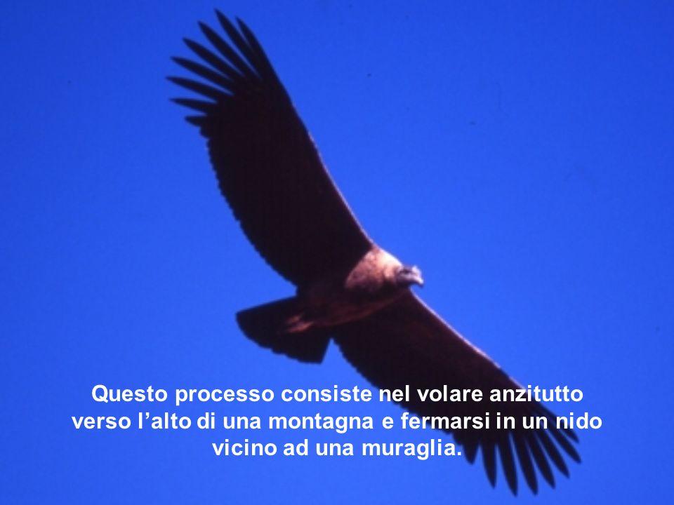 Questo processo consiste nel volare anzitutto verso l'alto di una montagna e fermarsi in un nido vicino ad una muraglia.