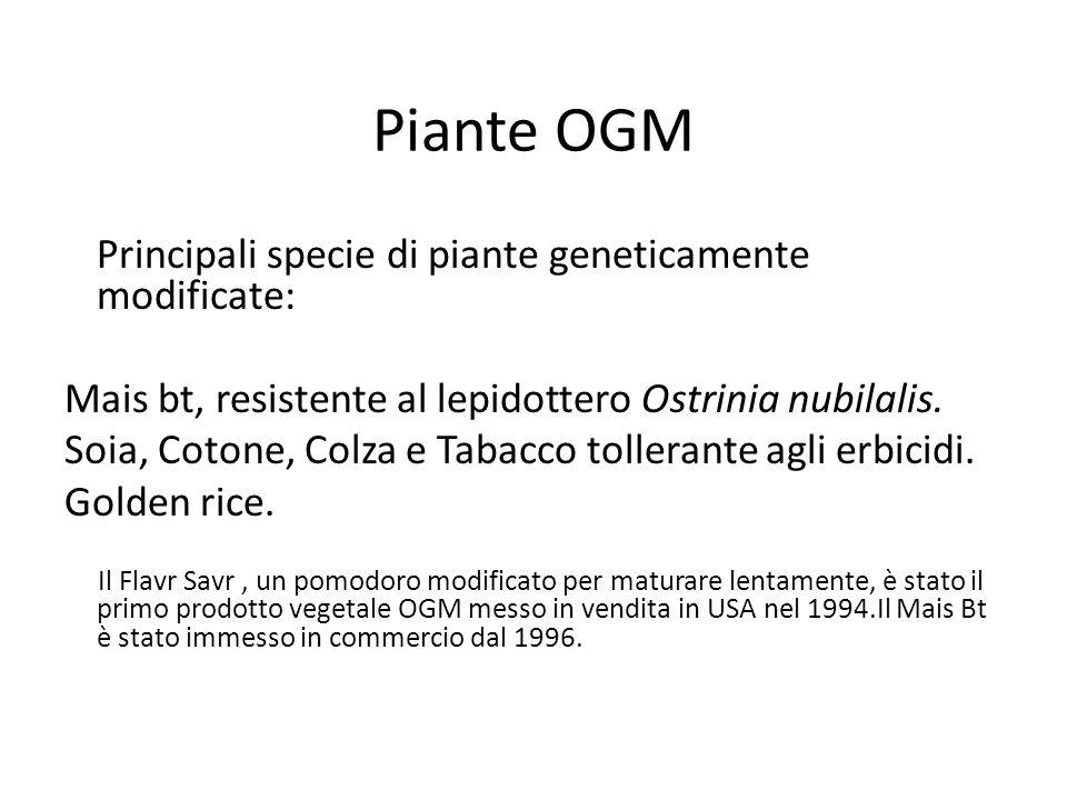 Piante OGM Mais bt, resistente al lepidottero Ostrinia nubilalis.