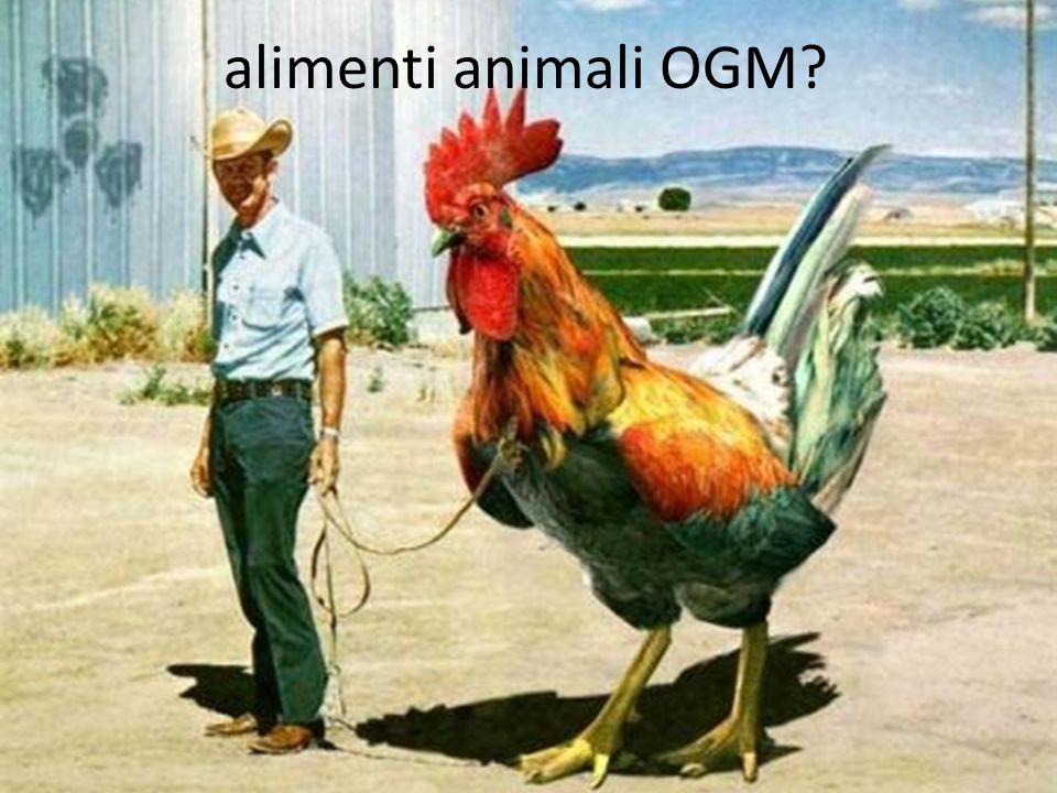 alimenti animali OGM