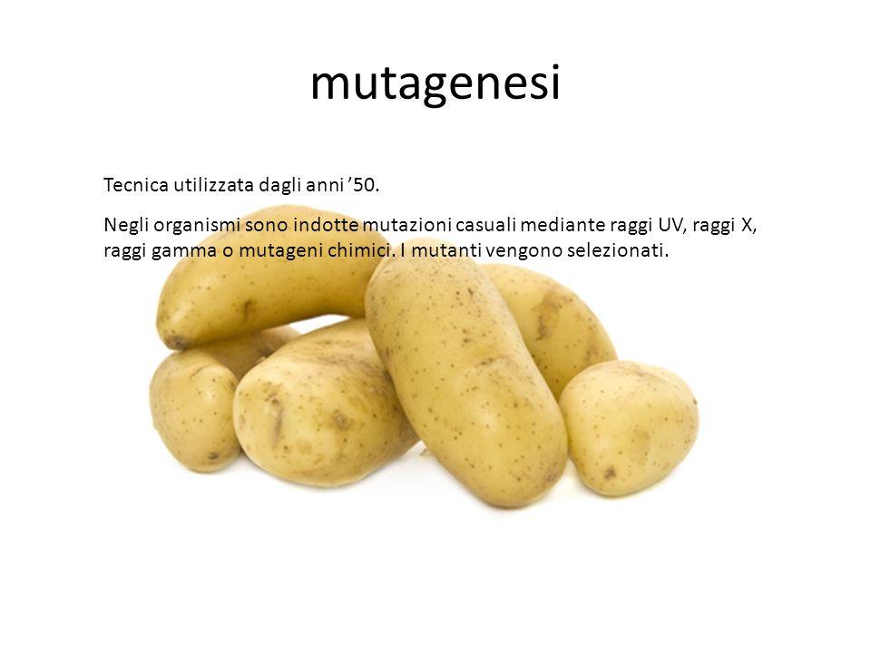 mutagenesi Tecnica utilizzata dagli anni '50.