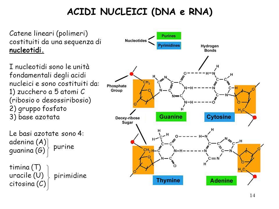ACIDI NUCLEICI (DNA e RNA)