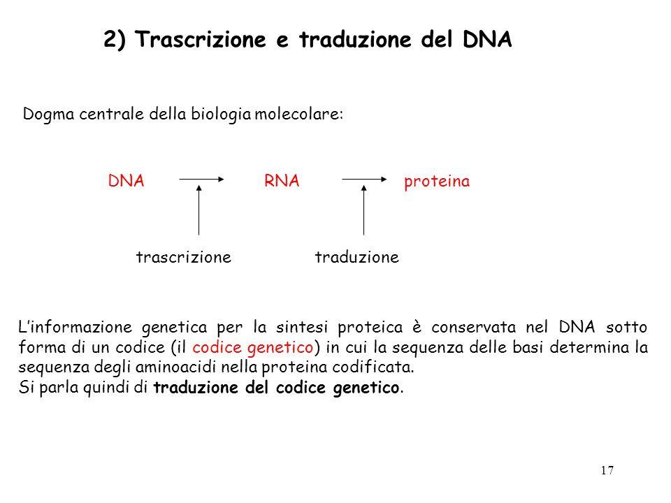 2) Trascrizione e traduzione del DNA