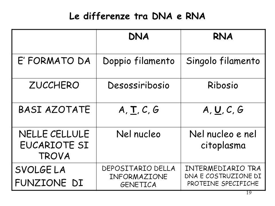Le differenze tra DNA e RNA