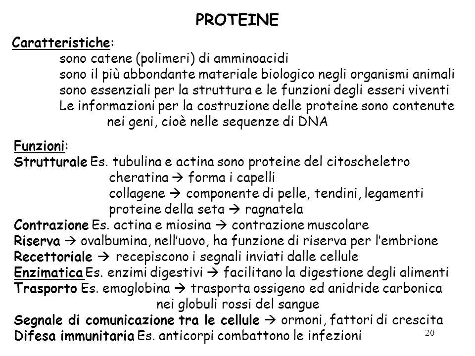 PROTEINE Caratteristiche: sono catene (polimeri) di amminoacidi