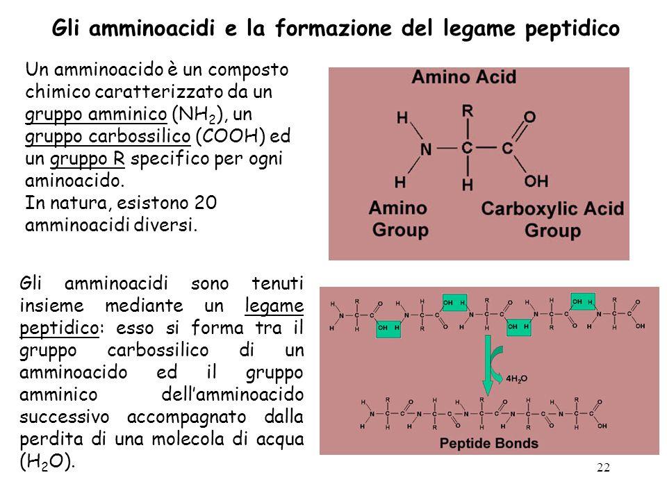 Gli amminoacidi e la formazione del legame peptidico