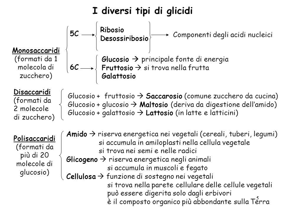 I diversi tipi di glicidi