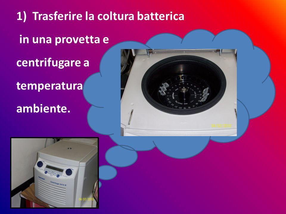 Trasferire la coltura batterica in una provetta e centrifugare a