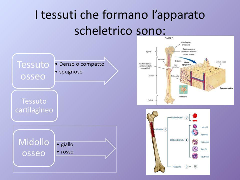 I tessuti che formano l'apparato scheletrico sono:
