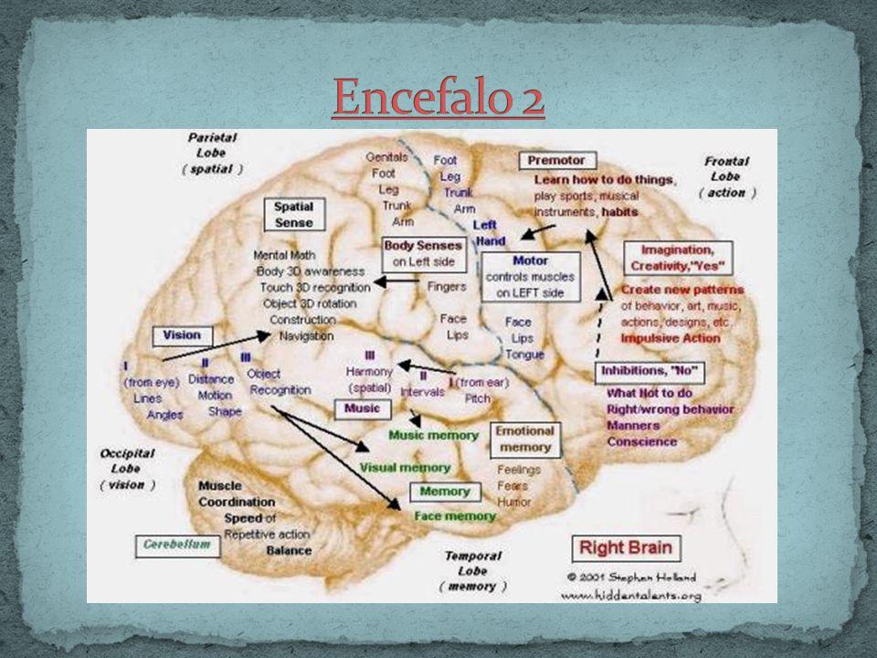 Encefalo 2