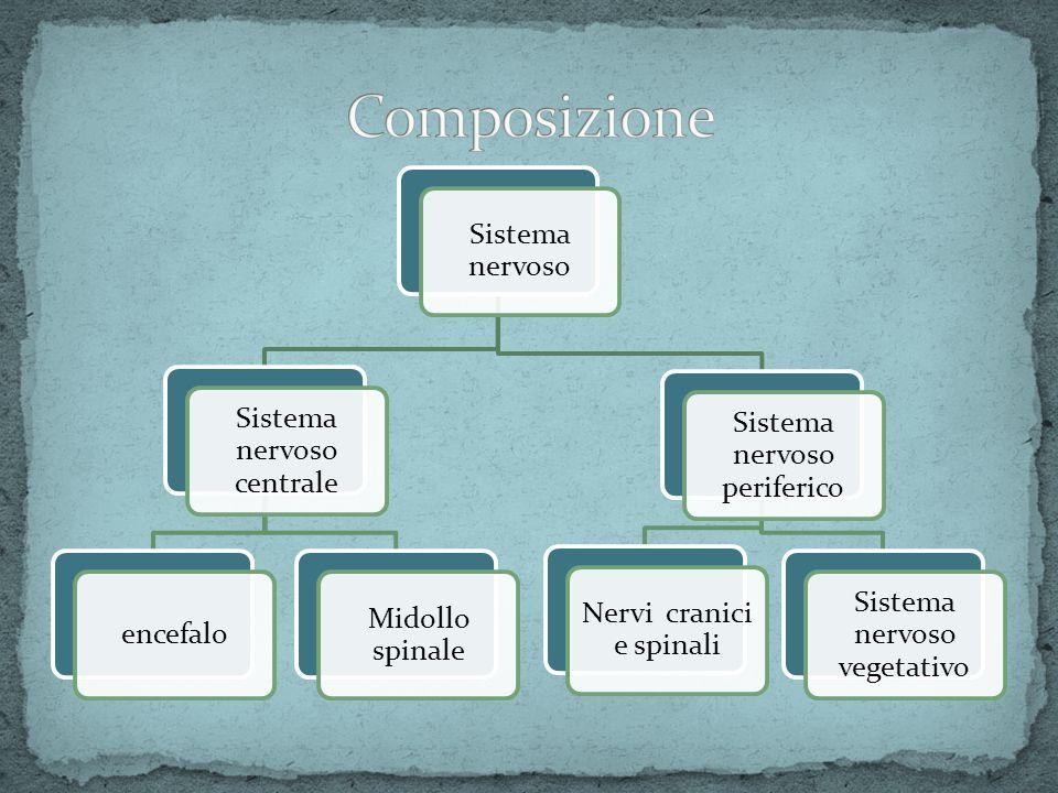 Composizione Sistema nervoso Sistema nervoso centrale encefalo