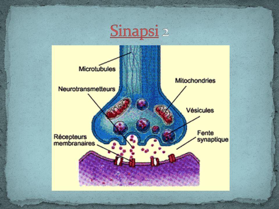 Sinapsi 2