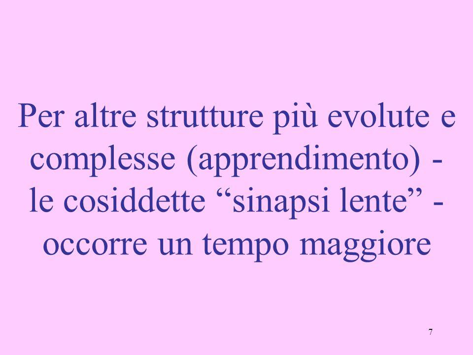 Per altre strutture più evolute e complesse (apprendimento) - le cosiddette sinapsi lente - occorre un tempo maggiore