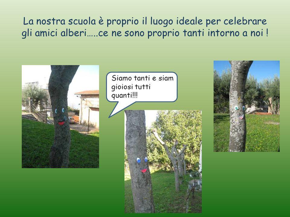 La nostra scuola è proprio il luogo ideale per celebrare gli amici alberi…..ce ne sono proprio tanti intorno a noi !