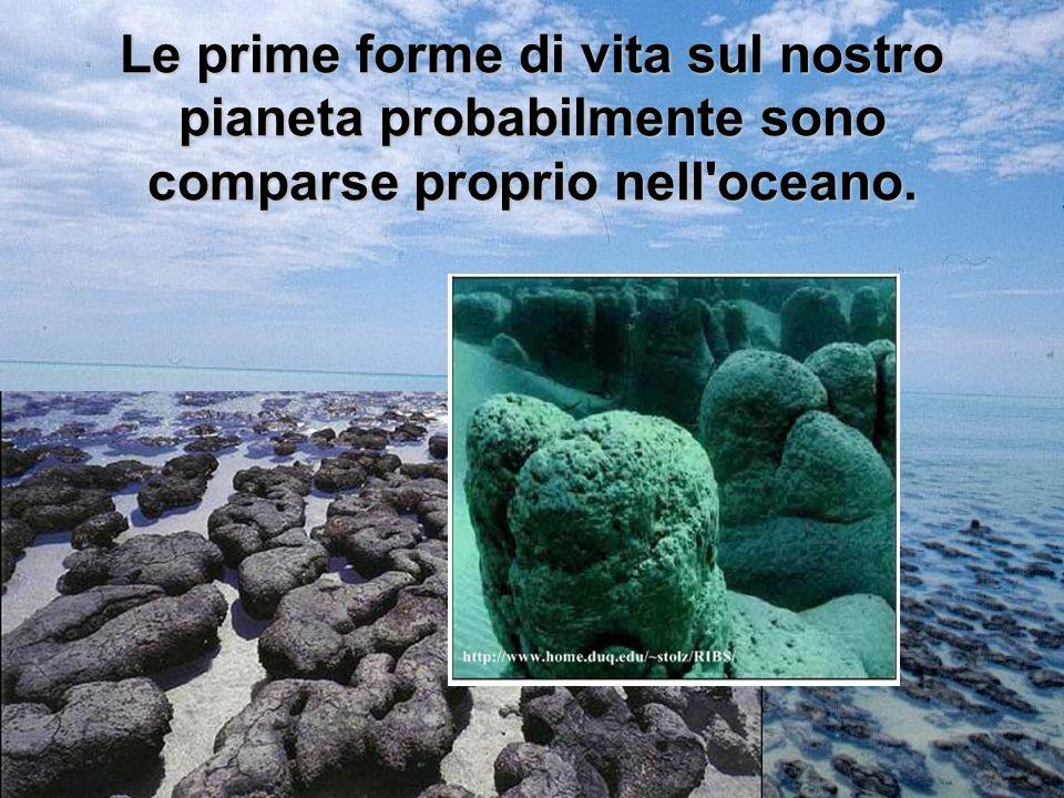 Le prime forme di vita sul nostro pianeta probabilmente sono comparse proprio nell oceano.