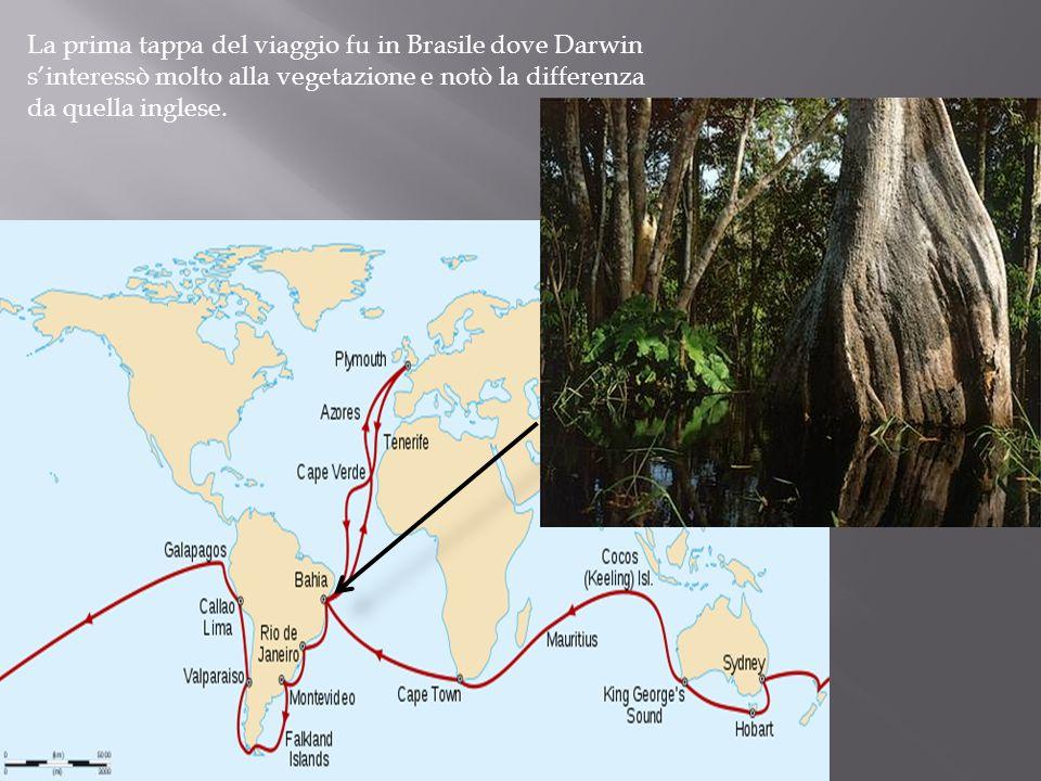 La prima tappa del viaggio fu in Brasile dove Darwin s'interessò molto alla vegetazione e notò la differenza da quella inglese.