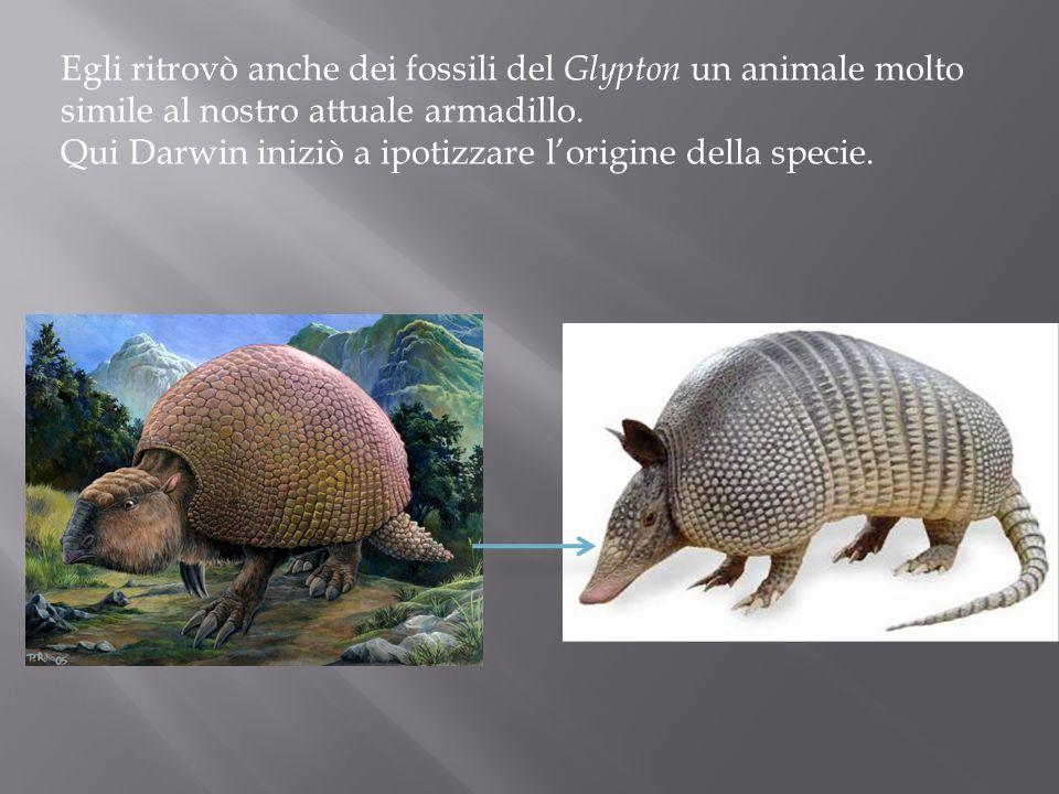 Egli ritrovò anche dei fossili del Glypton un animale molto