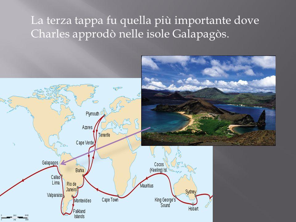 La terza tappa fu quella più importante dove Charles approdò nelle isole Galapagòs.