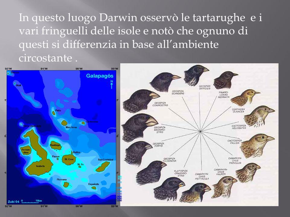 In questo luogo Darwin osservò le tartarughe e i vari fringuelli delle isole e notò che ognuno di questi si differenzia in base all'ambiente circostante .