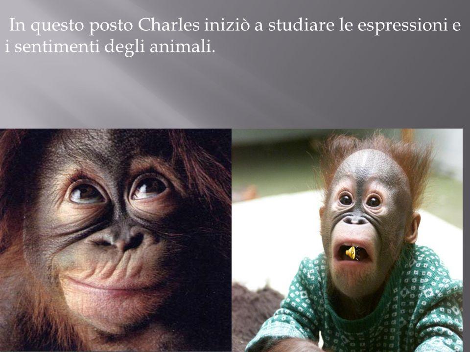In questo posto Charles iniziò a studiare le espressioni e i sentimenti degli animali.