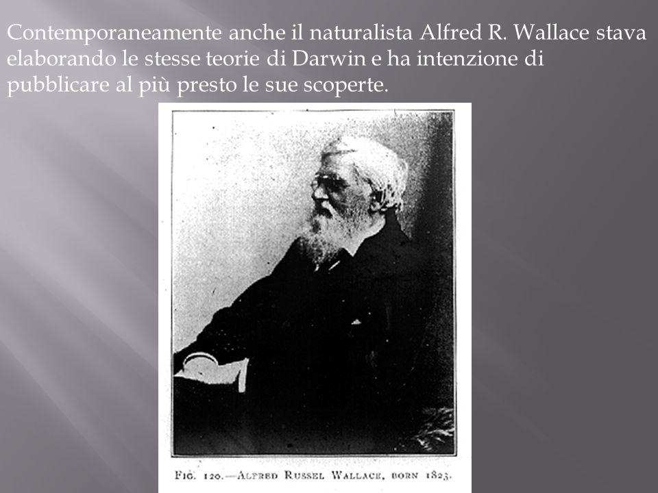Contemporaneamente anche il naturalista Alfred R