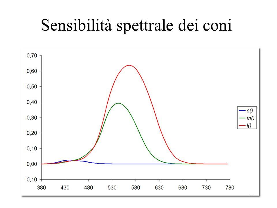 Sensibilità spettrale dei coni