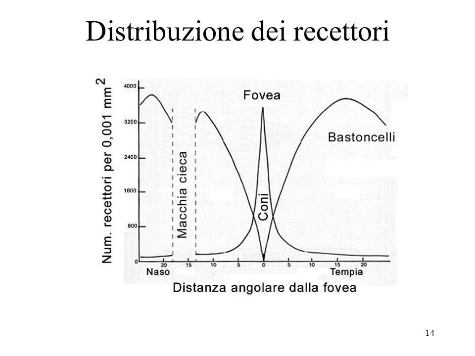 Distribuzione dei recettori
