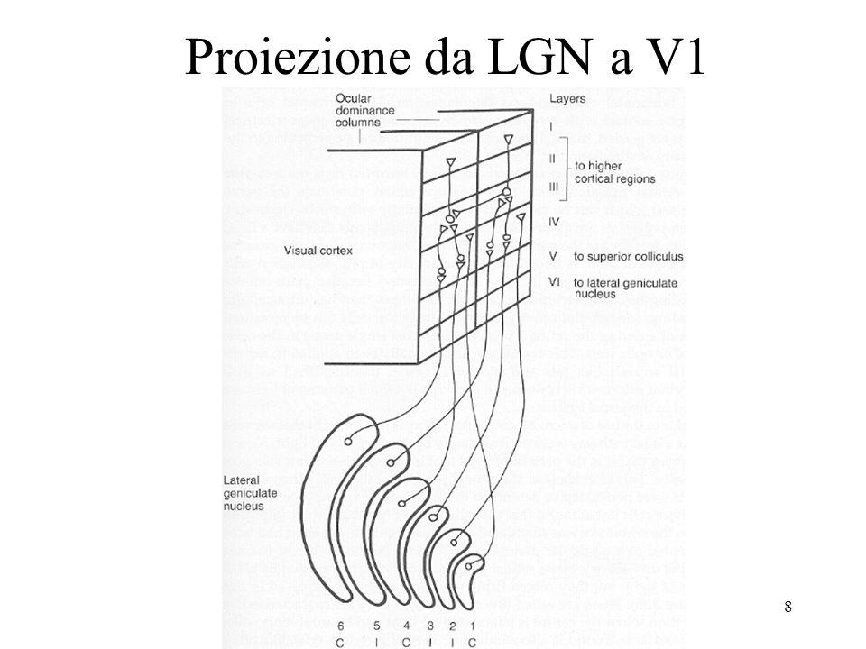 Proiezione da LGN a V1