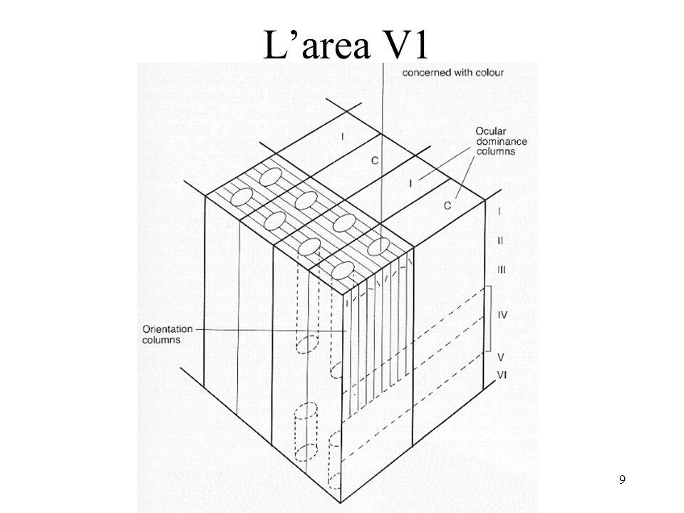 L'area V1