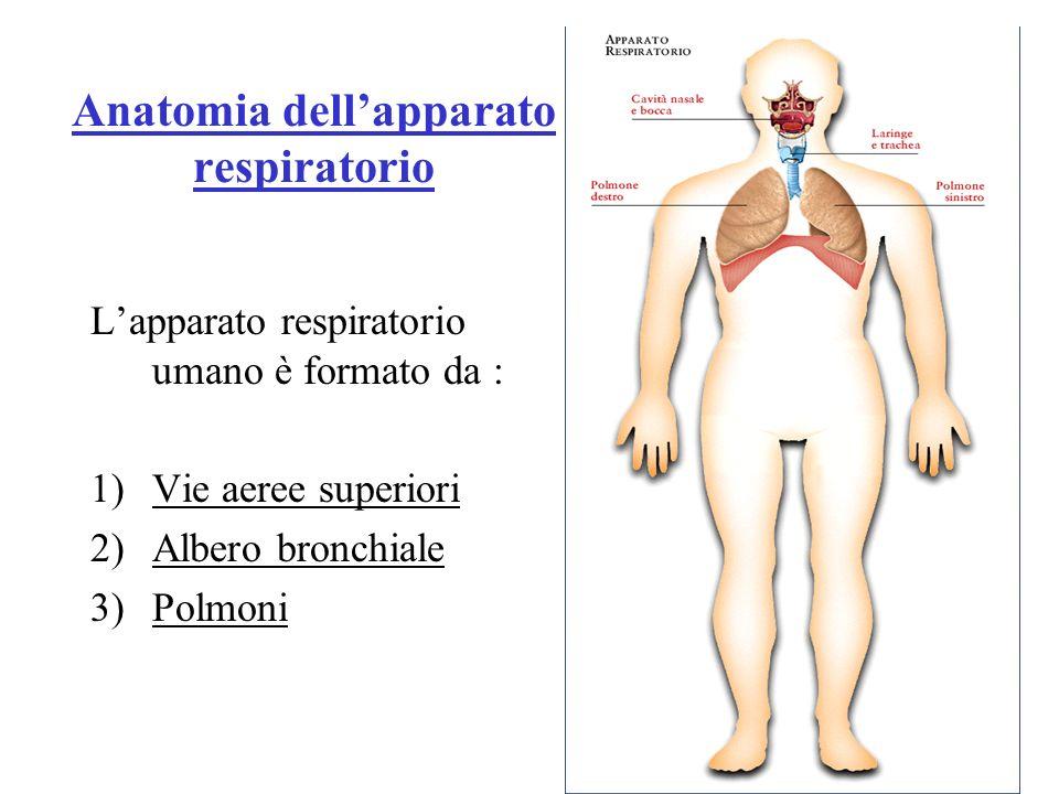 Anatomia dell'apparato respiratorio
