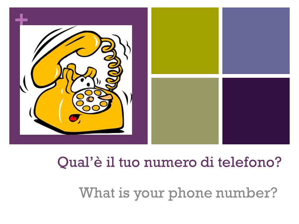 Qual'è il tuo numero di telefono